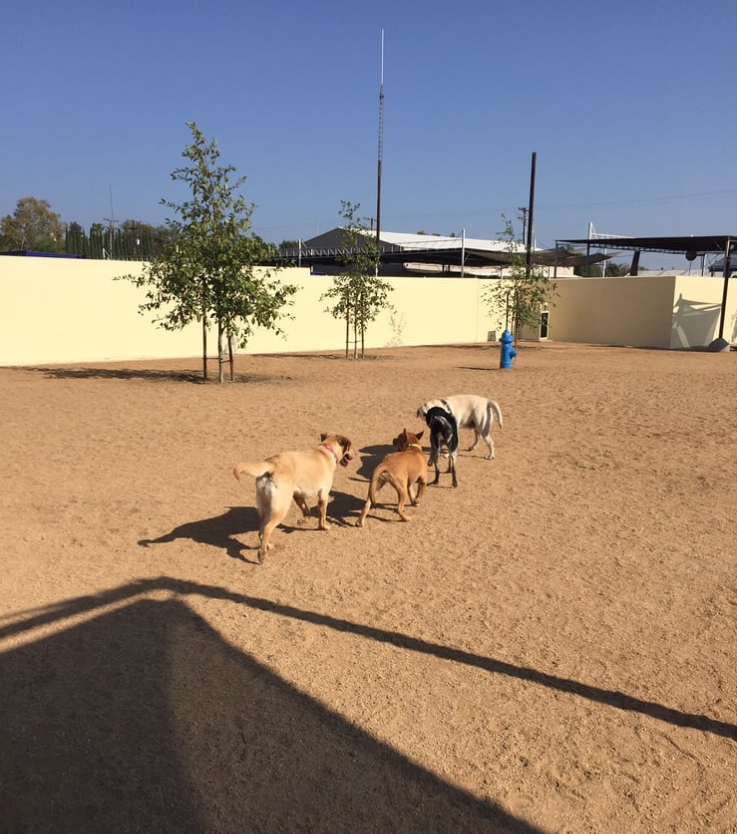 Whittier Dog Park